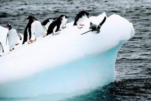 Penguins Birds Iceberg Ice Cold